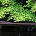 Photos: 金沢 尾山神社 180518 07
