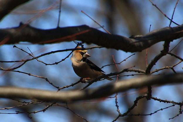 我が町の野鳥 190308 01