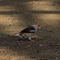 我が町の野鳥 190325 03