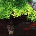 吉見観音(安楽寺) 200528 09