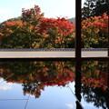 Photos: 桐生 宝徳寺 181114 10