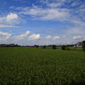 加須オニバス自生地 200801 01