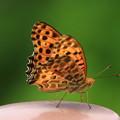 赤見台近隣公園のチョウ 200720 01