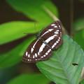 赤見台近隣公園のチョウ 200722 01