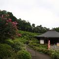 Photos: 塩船観音寺 200917 09