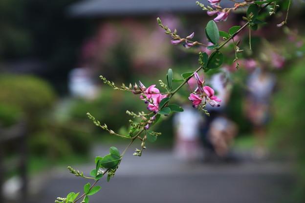 Photos: 塩船観音寺 200917 10