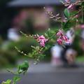 塩船観音寺 200917 10