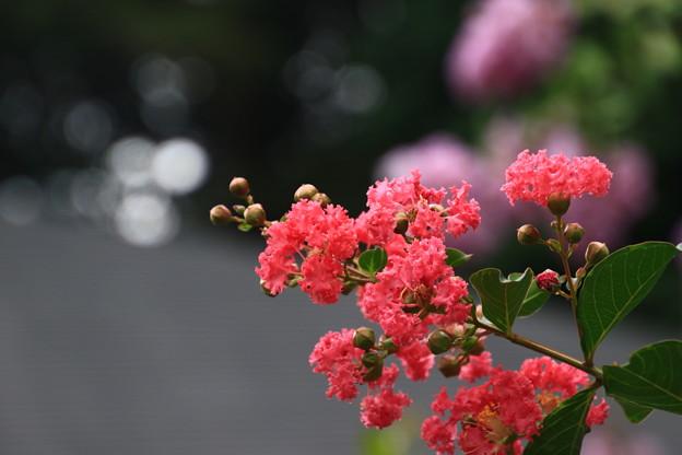 塩船観音寺 200917 15