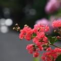Photos: 塩船観音寺 200917 15