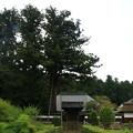 Photos: 安楽寺 200917 01