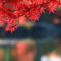 Photos: 毛越寺 201112 05