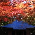 Photos: 中尊寺 201112 06