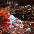 Photos: 中尊寺 201112 09