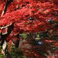 Photos: 中尊寺 201112 11
