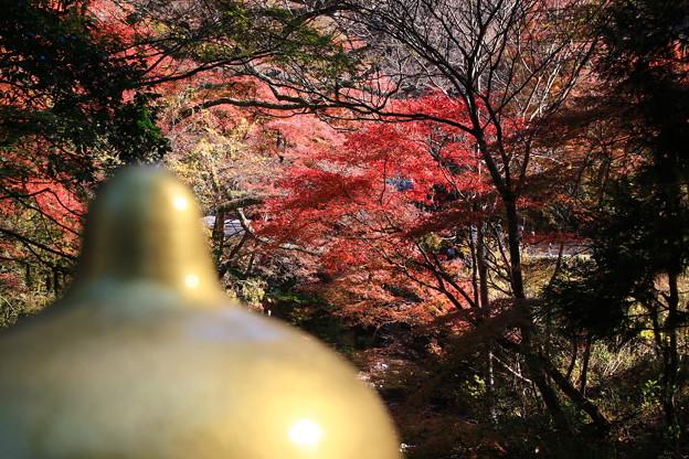 雲巌寺 201117 09
