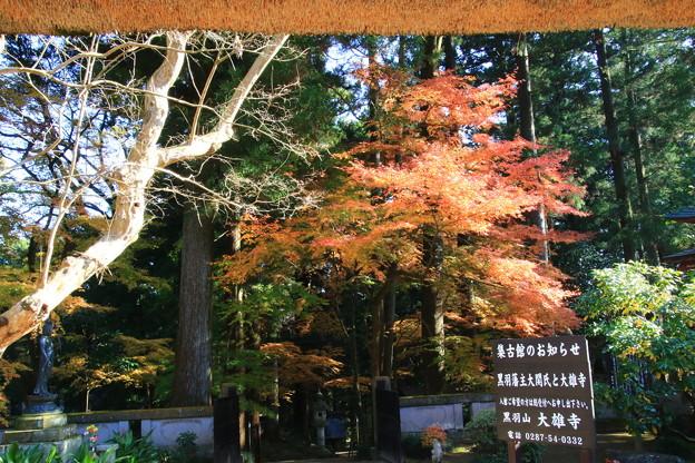 大雄寺 201117 03