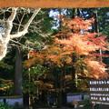 Photos: 大雄寺 201117 03