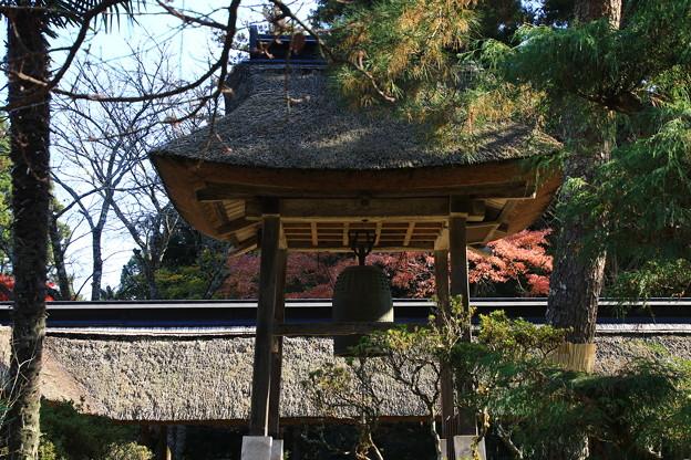 大雄寺 201117 04