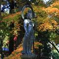 Photos: 大雄寺 201117 07
