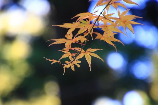 大雄寺 201117 08