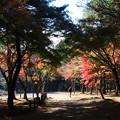 Photos: 平林寺 201130 04