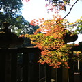 Photos: 平林寺 201130 05