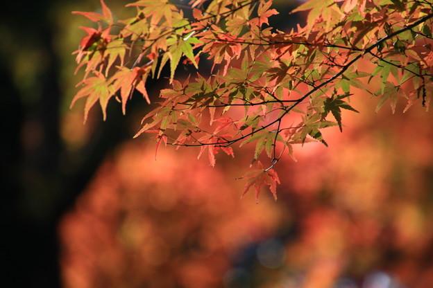 平林寺 201130 07