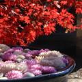Photos: 行田八幡神社 201207 02