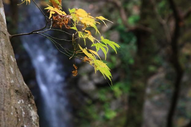 黒山三滝 201210 04