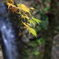 Photos: 黒山三滝 201210 04