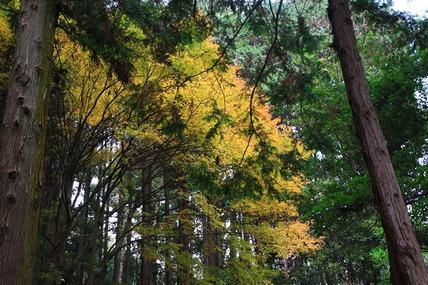 龍穏寺 201210 10