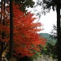 Photos: 龍穏寺 201210 11