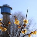 Photos: 古代蓮の里 210104 05