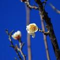 Photos: 古代蓮の里 210104 06