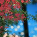四万川 201027 01