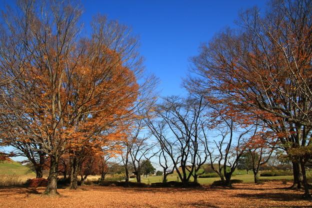 さきたま古墳公園 201207 02