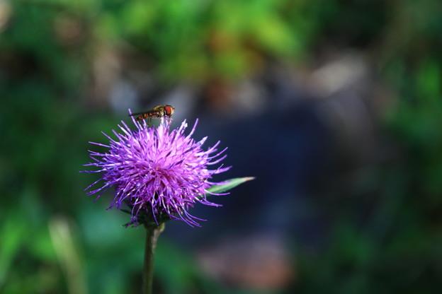 武蔵丘陵森林公園 201104 02