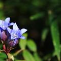 武蔵丘陵森林公園 201104 05