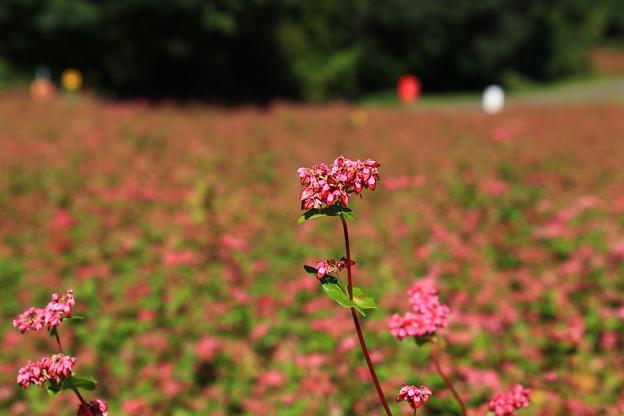 武蔵丘陵森林公園 201104 07
