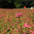 Photos: 武蔵丘陵森林公園 201104 07