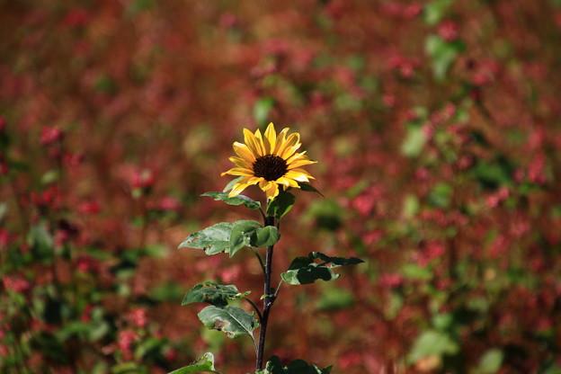 武蔵丘陵森林公園 201104 08