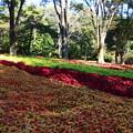 武蔵丘陵森林公園 201104 09
