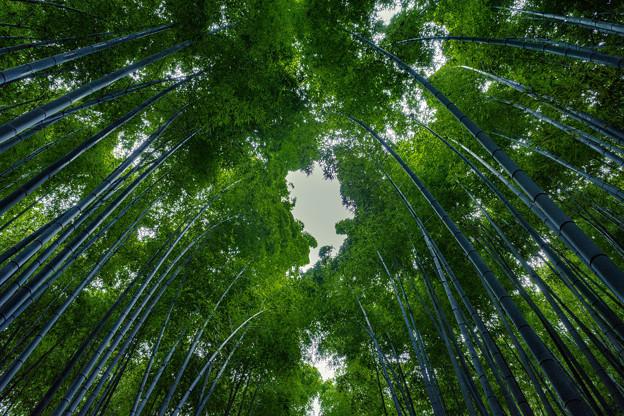 竹林の小径 2