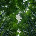 Photos: 竹林の小径 2