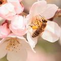 写真: 花とミツバチ
