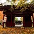 Photos: 雨の小松寺