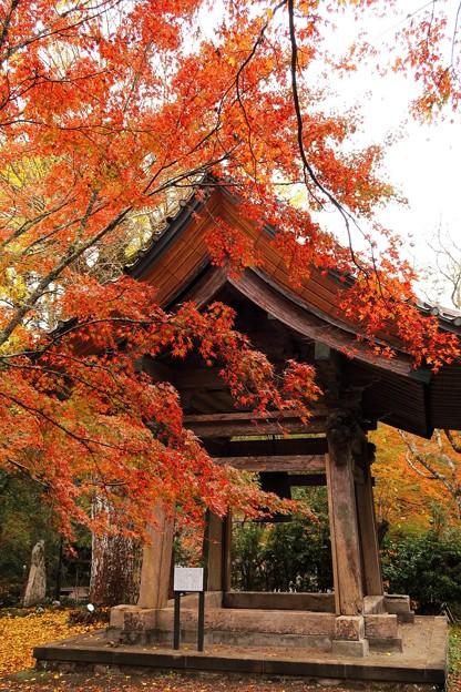 小松寺 雨 紅葉