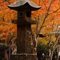 Photos: 雨の小松寺にて。