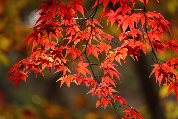 小松寺の紅葉