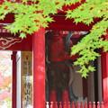 南房総市 小松寺の紅葉